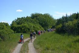 Kjerrevei mot fyret. Veien går rundt hele Bastøya, men er bare tilgjengelig i organisert følge. - Foto: Ukjent