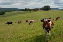 Bjerkem gård i Henning - Foto: Visit Innherred AS, Bjerkem