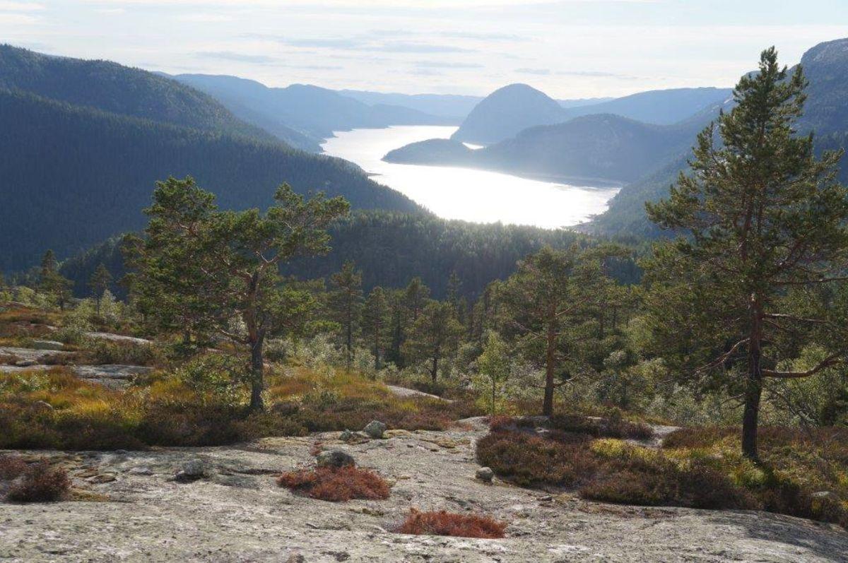 Utsikt til Napevatn