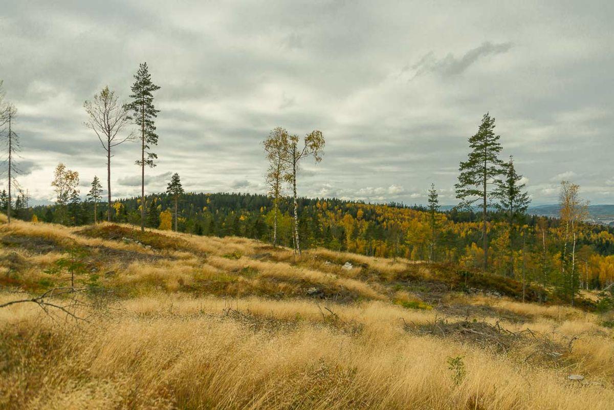 Utsikt til Hauglifjellet fra Ausenfjellet