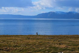 Hit, men ikke lengre. Sørenden av Frosta med utsikt ut Trondheimsfjorden. - Foto: Oddlaug Lindgaard