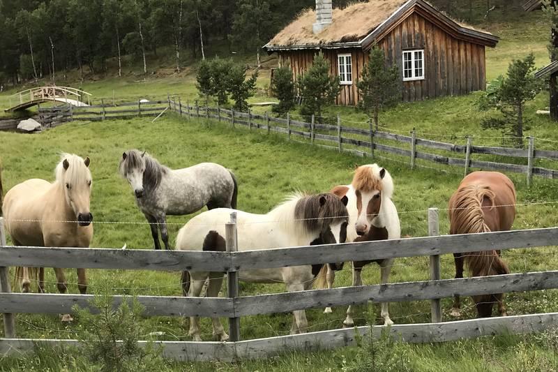 Hester på Savalbete