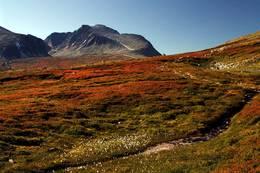 Høstfarger i Rondane  - Foto: Finn Grove-Knutsen