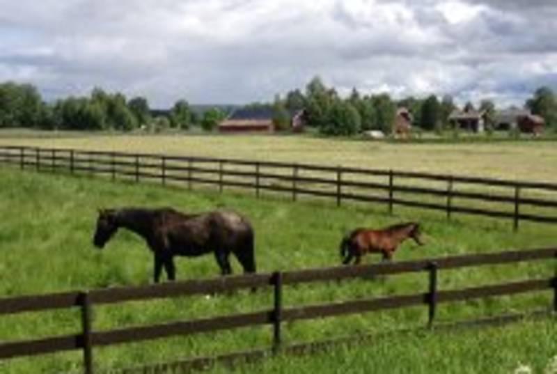 Hester ved verken