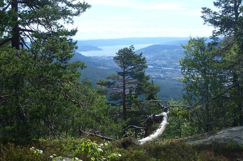 Utsikt fra Lokkeråsen