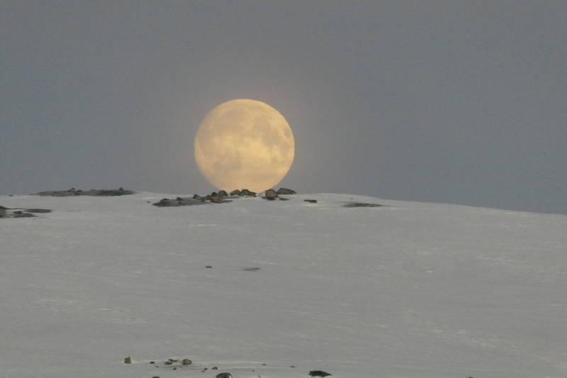 Fullmånen tar kvelden - en tidlig morra