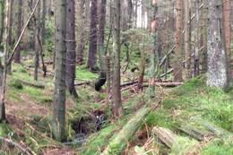 Typisk skogsområde - Foto: Ukjent