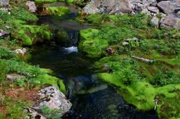 Her renn verdens beste vatn så de e berre å fylle vannflaska. - Foto: Svenn-Petter Kjerpeset.