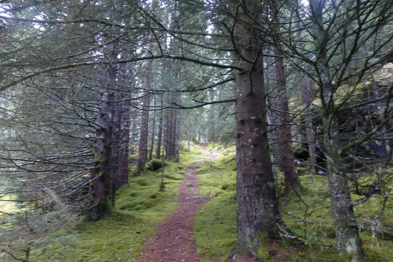 Fin sti i skogen