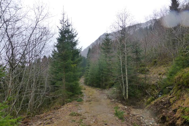 Fin skogsveg