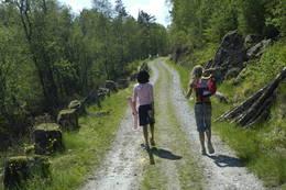 Det er en knapp kilometer å gå på nydelig gammel grusvei fra parkering til Træet gård på Osterøy.  - Foto: Torill Refsdal Aaase