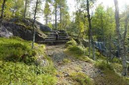 Stien fra Bleskestad går gjennom eit spennende terreng og du går i gamle trapper som ble brukt for å kune kløve hest opp til moen - Foto: Per Henriksen