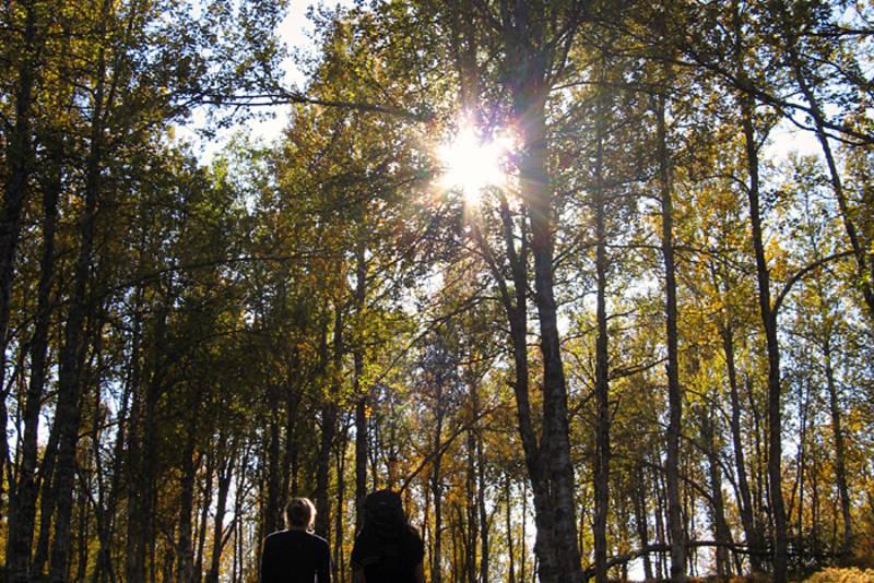 På vei til Nonsbu hytte gjennom skogen i full høstfarger, 9 september 2010.