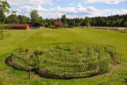 Finner du veien inn til midten av pilelabyrinten? - Foto: Jan Kenneth Gussiås