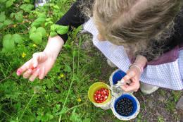 Bærplukking gir kortreist mat - Foto: Ukjent
