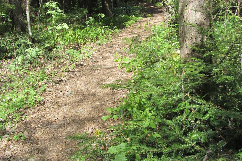 Varmekjær skog med b.l.a. barlind.