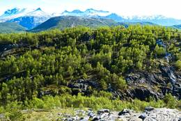 Skogstur på Knaplundsøya - Foto: Tursiden for Bodø og Salten
