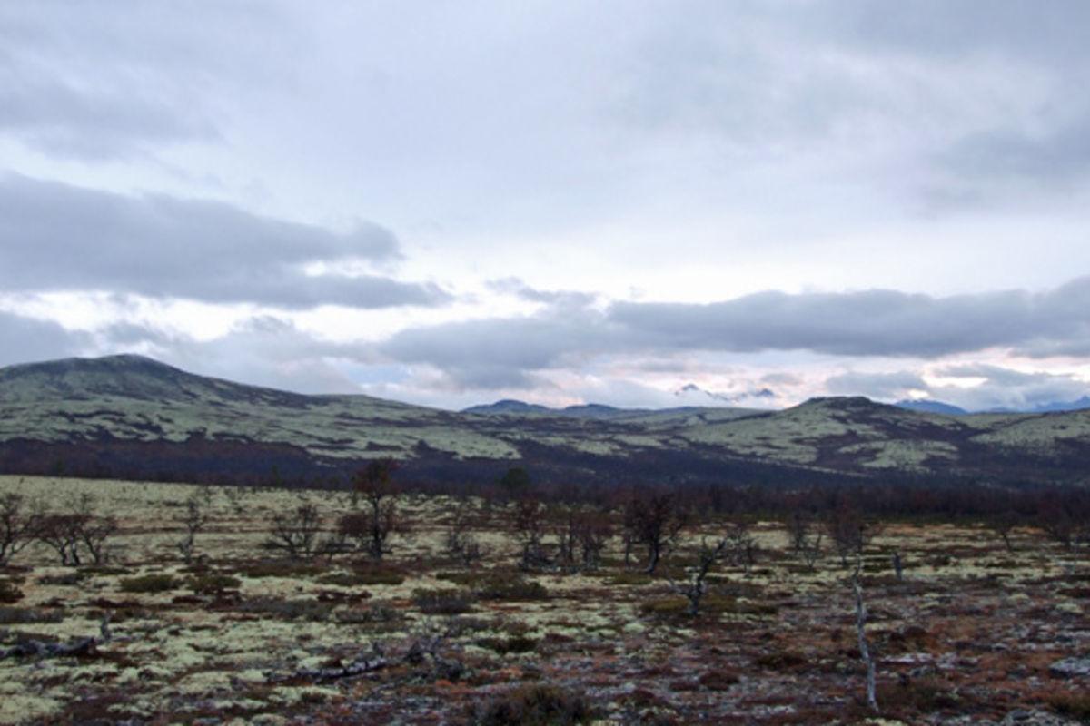 Utsikt fra Reinslia