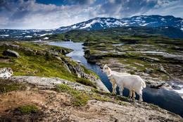 Langs Opoelva -  Foto: Ivar Eidnes