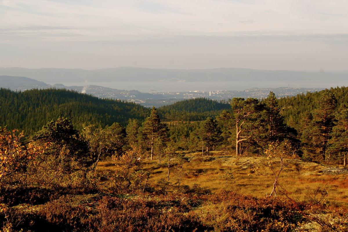 Kveldsutsikt mot Trondheim fra Higeråsen