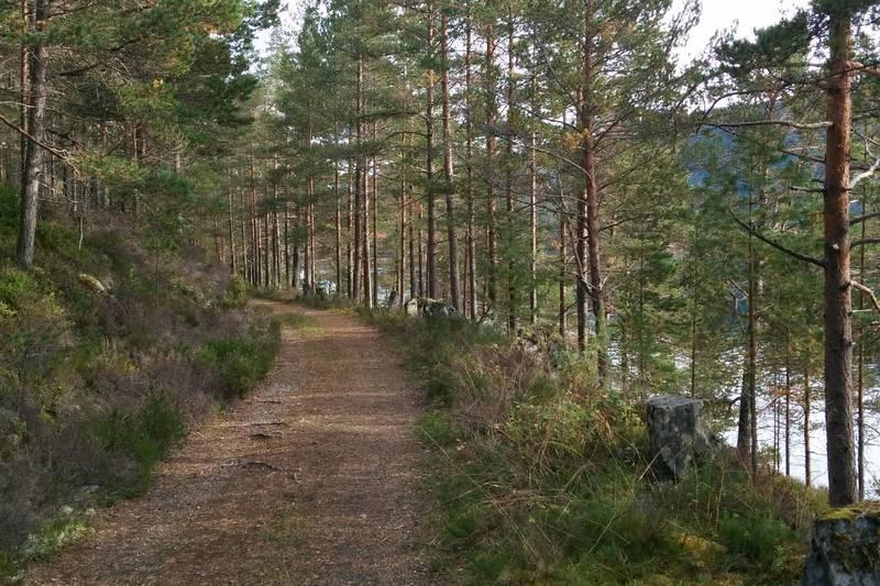 Fin gammal veg fra Skjerneset til Kongsvik