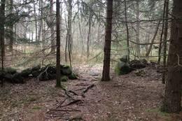 Et gammelt steingjerde inne i skogen - Foto: Anders Sten Nessem