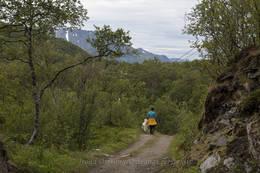 Turen ut til Engnes går på en godt vedlikeholdt kjerrevei, gjennom frodig skog. -  Foto: Trond Østvang