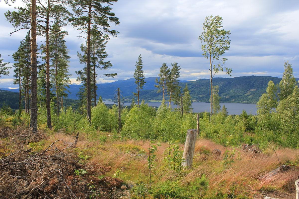 Utsikt nordøstover mot Krøderfjorden.