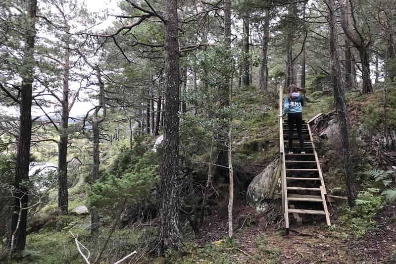 Over demningen i enden av Sagevatnet er det ei gangbru og det er laga trappetrinn opp lia i furuskogen