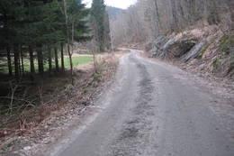 Skogsbilveien opp til Vranglevann har god standard. - Foto: Floke Bredland