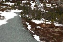 Den bratteste delen av stien - Foto: Kathrine Kragøe, Innherred Reiseliv