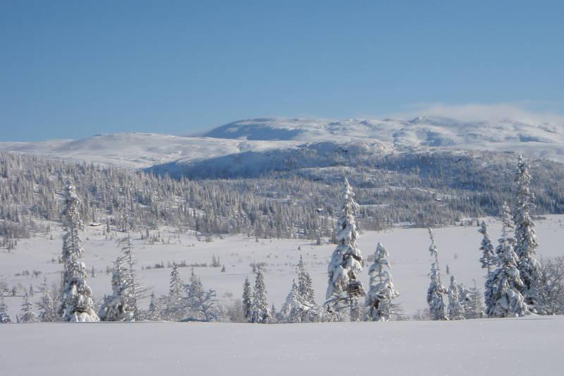 Vekta med usikt utover Stråsjøen