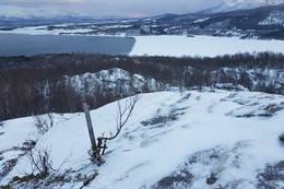 Klippetanga - Foto: Kjell Fredriksen