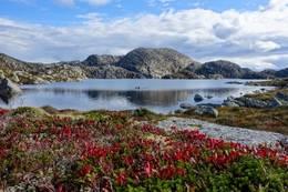 Flott på toppen -  Foto: Erik Haaland