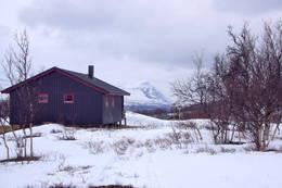 Sein vinter ved Dividalshytta - Foto: Marie Brøvig Andersen