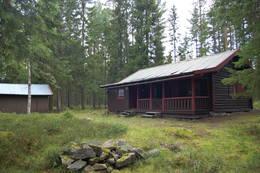Svartskogkoia - Foto: Ole Lien