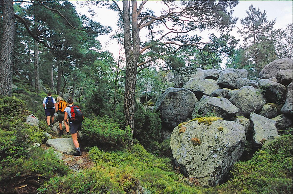 Stien går langs etter en flott, storsteinet sidemorene som viser at Lysefjordbreen i en periode lå her.