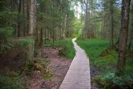 Stien ved Sjursrud - Foto: Øystein Berntsen