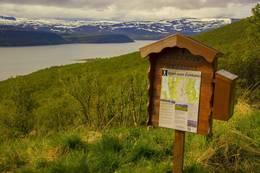 Startpunktet på Vestertanafjellet ved parkeringsplassen. - Foto: Frank Martin Ingilæ