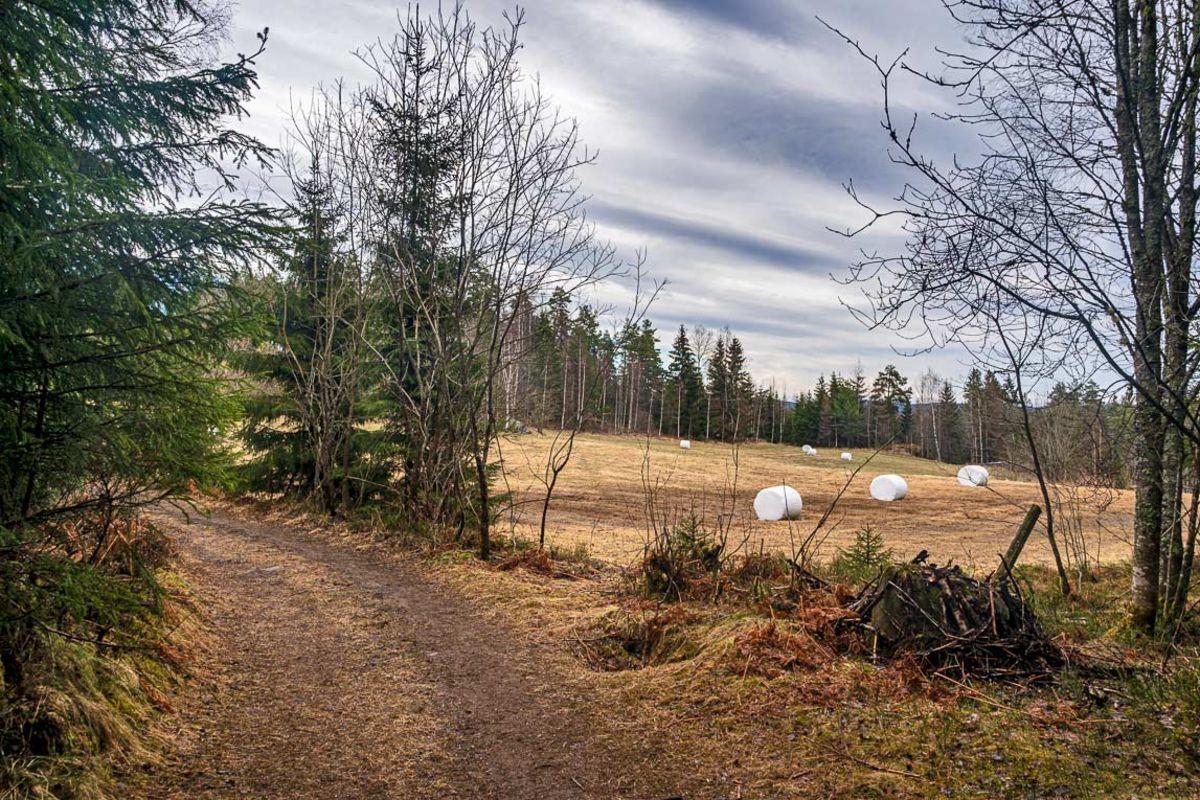 Skogsveien går ut av skogen