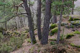 Restene av en steinbarrikade i skaret til venstre i bildet. - Foto: Ukjent