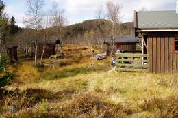 Granbustøyl - Foto: Erik Hjelmberg