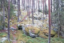 Fin sti i skogterreng -  Foto: Jørn Magne Forland
