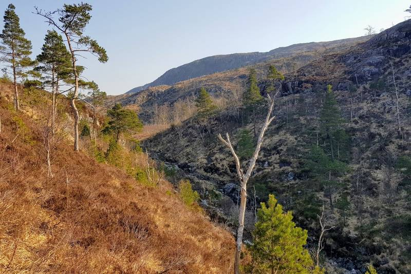 Landskap ved Furedalen