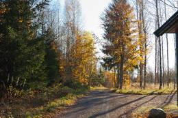 Langs Føskeveien - Foto: Ukjent