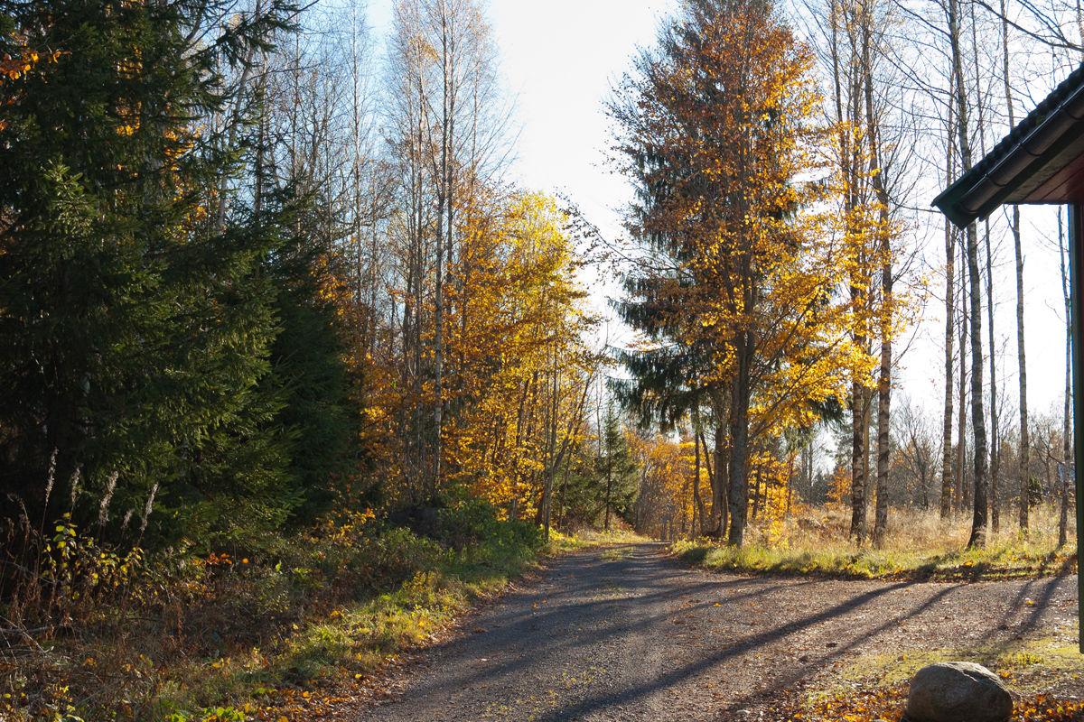 Langs Føskeveien