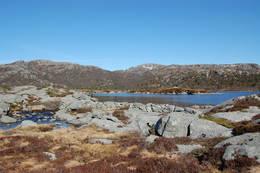 Grautavatn, med rester av gammal stem - Foto: Roald Årvik