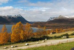 Gjevilvassdalen om høsten - Foto: Odd Harald Eriksen