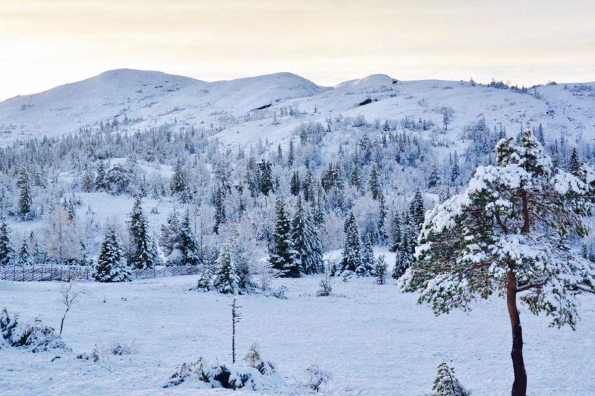 Vinter på Hårskallen