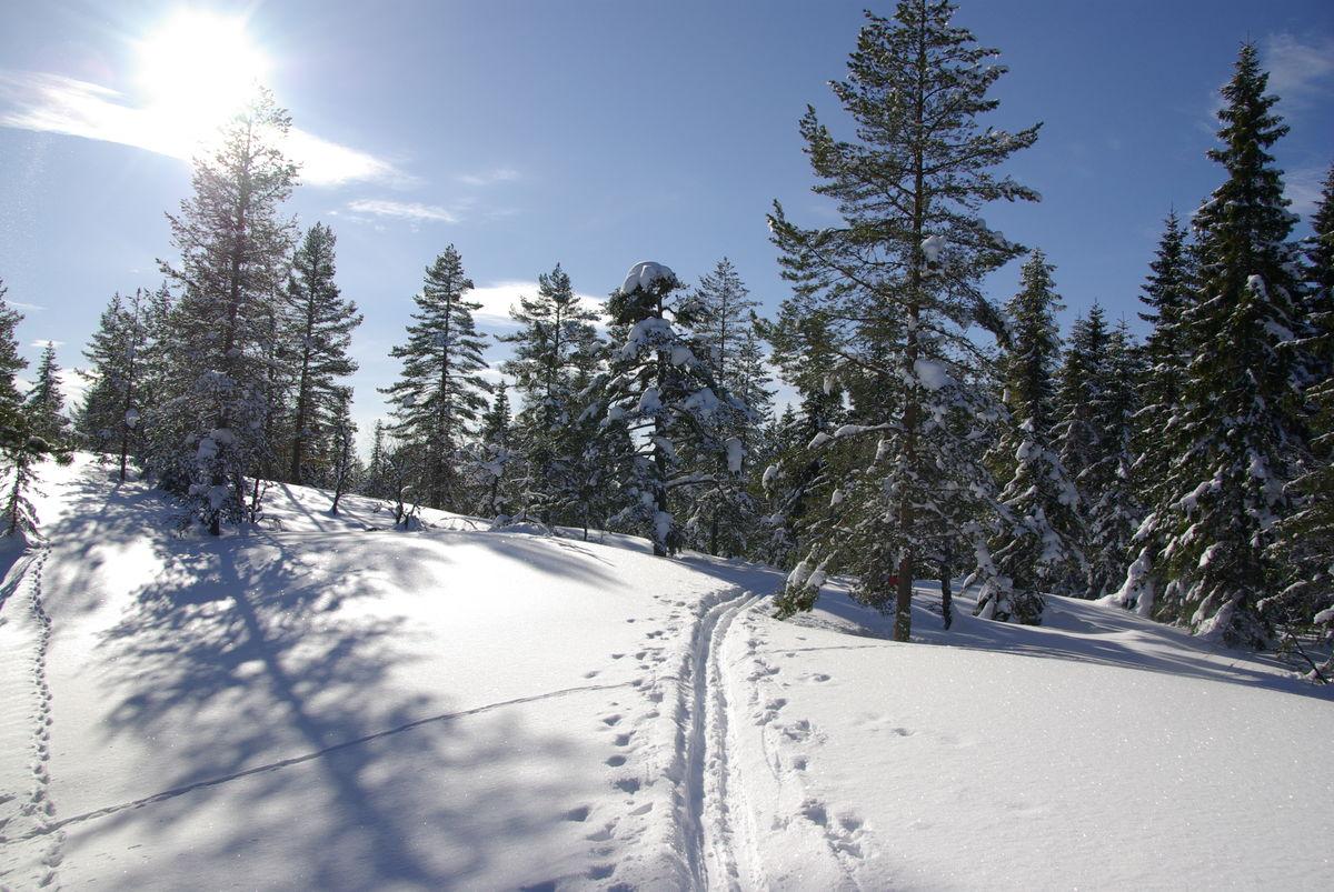 Flotte skiturmuligheter i området